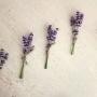Corsage   Lavendel
