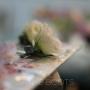 Haarcorsage   Lisianthus; mooie, lichte bloem